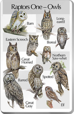 For The Birds Raptors - Owls by Identiflyer at Sears.com